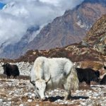 tamang heritage Trek-Nepal Treks and Tour
